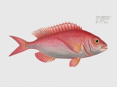 Fish Wall Art Decor