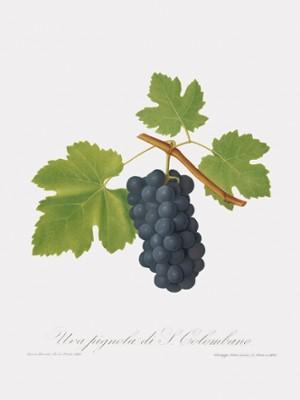 Grape Art