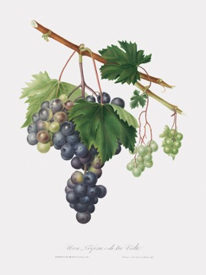 Grape Canvas Art